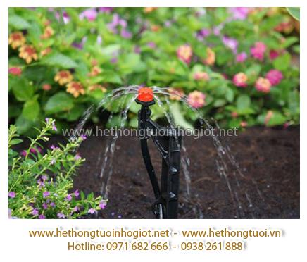 Tưới nhỏ giọt trong nhà kính – Trồng dưa lưới